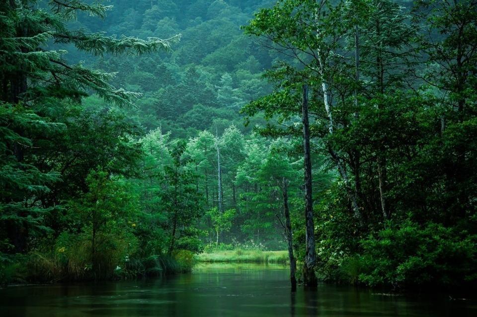 セラピスト、ヒーラー、アーティスト『森魔女』たちにカウンセリングを受けられる場所、埼玉のプライベートサロンそれが光の森テラスです。