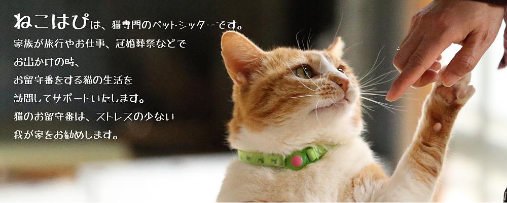 ねこはぴは猫専門のペットシッターです。