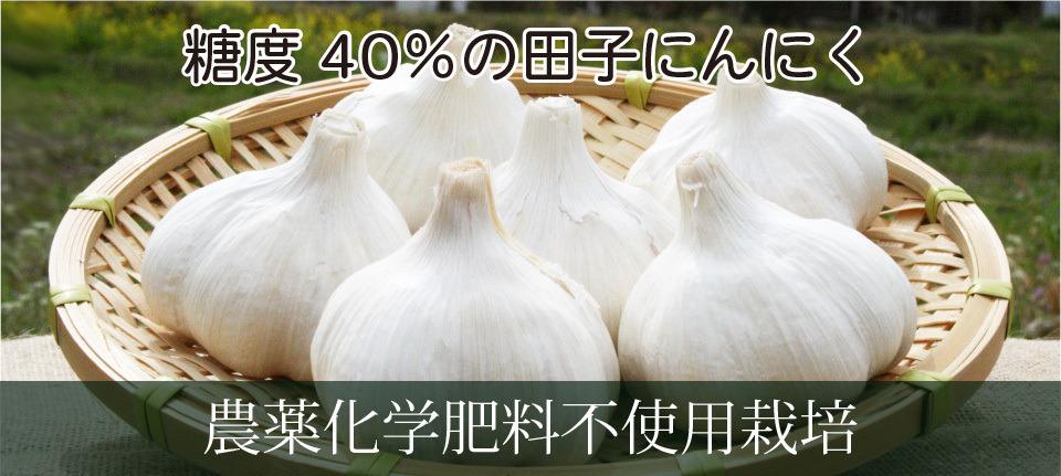 糖度40%の田子にんにく 農薬化学肥料不使用栽培